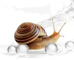 Snail Secretion Filtrate